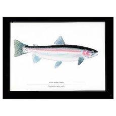Fly Fishing Print Steel Head Trout