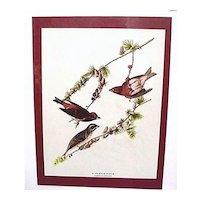 Audubon Print Purple Finch No. 4