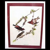 Audubon Print Purple Finch No. 4