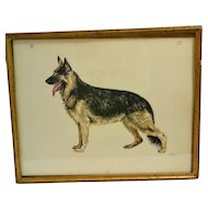 Original Vintage Etching of German Shepherd Dog