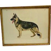 Original Vintage Etching of German Shepherd Dog