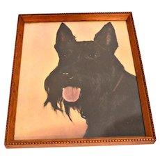 Vintage Scottish Terrier Portrait with Wood Frame under Glass c.1950's