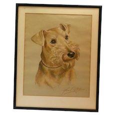 Airedale Terrier Portrait-  Artist Signed 1961