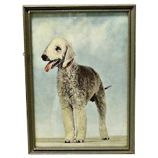 Colored Vintage Framed Photo Bedlington Terrier