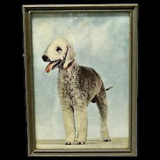 Colored Vintage Framed Photo Bedlington Terrier