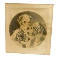 "19th Century Print ""Three Pals"" Hunting Dog Portrait c.1901"