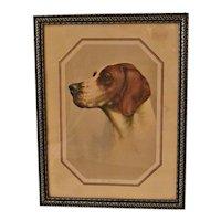 "Vintage Pointer Dog Original Print ""The Champion"" G.B.Fox c.1930's"