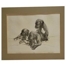 Limited Edition Print Wolfhound Dog Puppies - Artist Signed c.1981