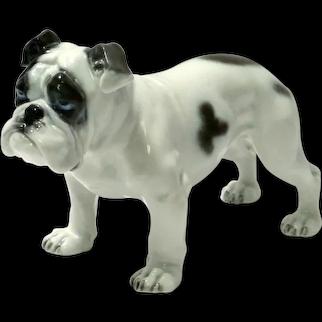 Vintage Rosenthal Bulldog Dog by Fritz Diller c. 1914