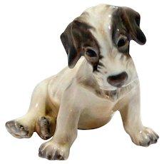 Dahl-Jensen Wire-Haired Fox Terrier Pup #1008