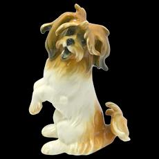 Rare Vintage Karl Ens Lhasa Apso Dog c. 1910 - 1920's