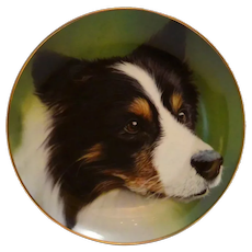Border Collie Collectible Plate