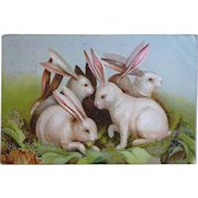 Postcards 2-Easter Bunny cards