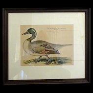 Bird Print - Framed Waterfowl