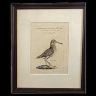 Bird Print - Framed Waterfowl print 2 of 7