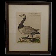 Bird Print - Framed Waterfowl  3 of 7