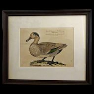 Bird Print - Framed Waterfowl  volume 4 of 7