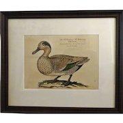 Bird Print - Framed Waterfowl  volume 4 of 7