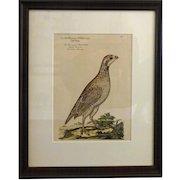 Bird Print - Framed Grouse  5 of 7