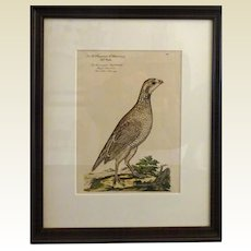 Bird Print - Framed Grouse  5 of 7