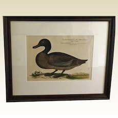Bird Print - Framed Waterfowl  6 of 7