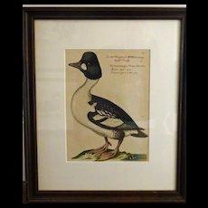 Bird Print - Framed Waterfowl  7of 7