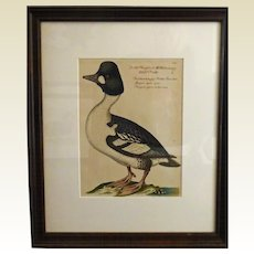 Bird Print - Framed Waterfowl  7of 7