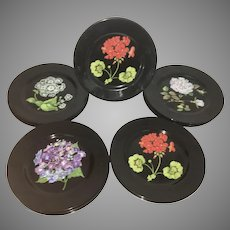12 Plates Tiffany Mrs. Delaney's Flowers Floral Sybil Connolly