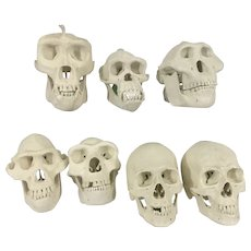 7 Vintage Resin Miniature Primate Skull Display Biology Anthropology Science Study