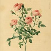 Zofia Rose's Emporium Shoppe