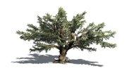 Cedar Tree Antiques