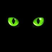 Black Cat Called Pedro