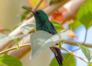 Hummingbird's Haul