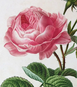 Original Antique Prints