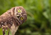Owl Haven Lane