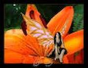 Tiger Lily Emporium