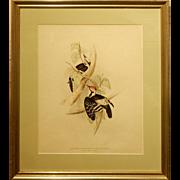Antique Audubon-Style Woodpecker Print
