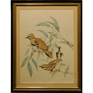 Antique Lithograph of Birds