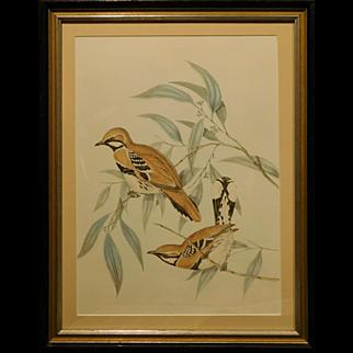 Antique Lithograph of Birds