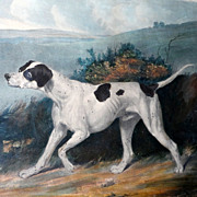Mid-19th Century Color Lithograph of a Dog—a Pointer--in a Landscape