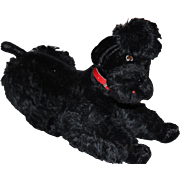 """1950's-1960's Steiff Black mohair Poodle, Snobby, untagged and no pin in ear, mohair missing by nose. Original red leather collar. 13"""" tall X 12"""" long."""