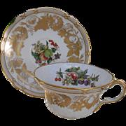 Elegant Spode Golden Valley Orchard Fruit Gold Encrusted Teacup and Saucer Y7049