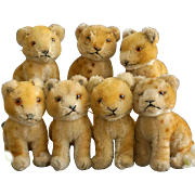 7 Small Young Lions, Steiff, 1956-61