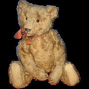 """Steiff Mohair Teddy Bear with button no restoration 11"""" Tall"""