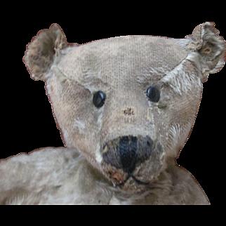 "Antique 15"" Steiff Bear Very Endearing"