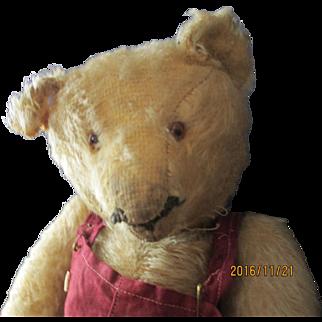 "Loved 13"" Steiff Teddy bear very sweet!"
