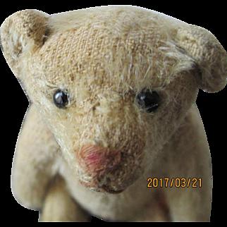 Steiff Antique Rattle Teddy
