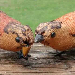 Pair of Very Well Loved Schuco Birds