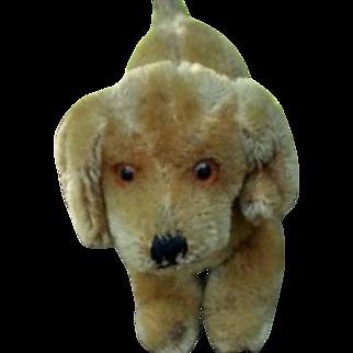 Cute Little Steiff Mohair Dog No ID