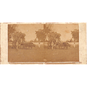 1860 Stereoview of Cuba #117 The Water Cart